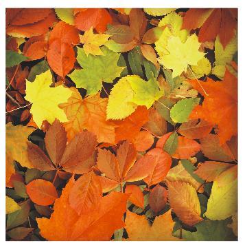 Квадратный стол осень